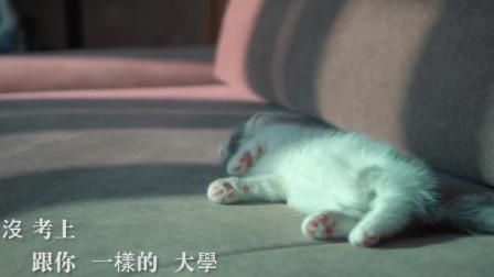 超级治愈的高清猫咪MV,恨不得抱起猫咪深吸一口