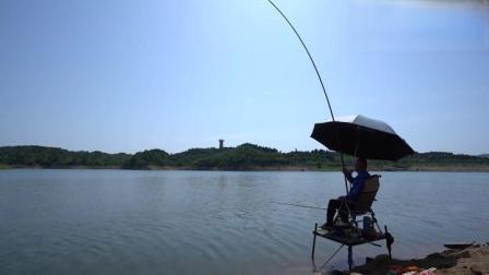 钓鱼:十多袋玉米打下水,老大毛成功捅了青鱼窝
