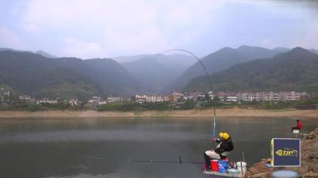 钓鱼:就喜欢看这种慢慢的黑漂,标准的青鱼吃口