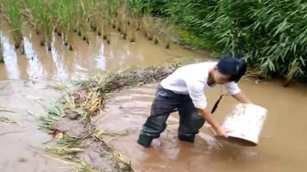 农村小伙带着表妹来深山老林排水抓鱼,看着令人羡慕,一定很好玩!