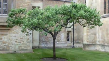 砸到牛顿的那颗苹果树,如今还活着?英国女王专门为它颁布保护令