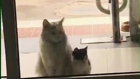 或许,这才是流浪猫最真实的状态吧
