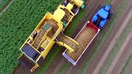 土豆收割也有快捷方式?老外发明土豆收割机,下地的瞬间有点震撼