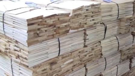 国外的实木板是如何制作的?老外现场拍摄,机器配合人工效率翻倍