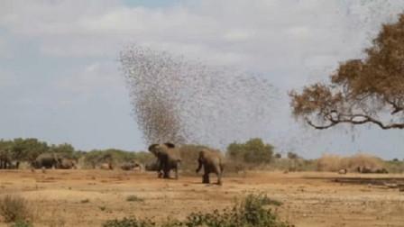 20万只麻雀围攻一头大象,接下来会发生什么?场面太激烈了!
