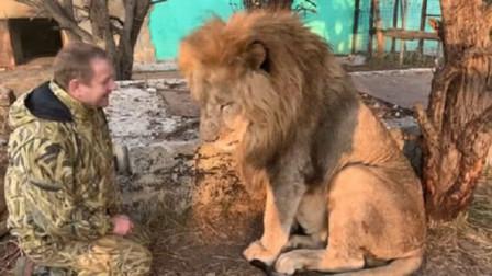 饲养员见雄狮心情烦躁,立刻亲了它几下,下一秒的场面让人笑翻!