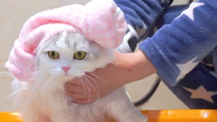 小猫咪洗澡不吵不闹看似超乖,其实逃跑无数次,主人抓猫抓到累瘫