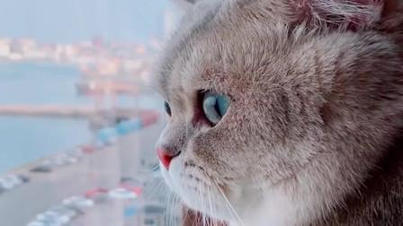 用团团的音乐配上猫咪的视频,感觉整个猫都智障了起来