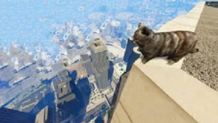 将猫咪从高楼摔下,把镜头放慢100倍,就知道为什么摔不死了!