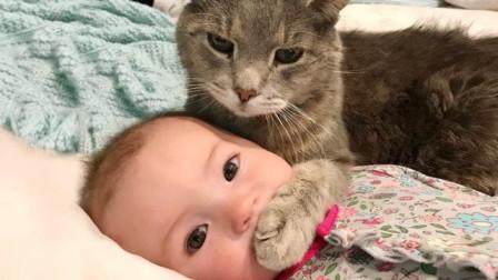 为什么人去世后猫不能靠近尸体?这不是迷信,有一定科学依据!
