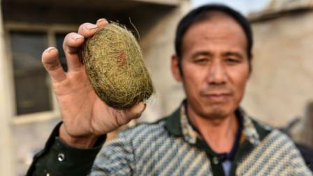 农户喜得猪宝估值300万,网友:我家的猪宝更大,1万谁要?