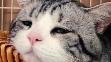 如果你能听懂猫语,就知道猫咪的世界也会有伤心难过