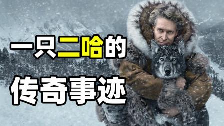 传奇雪橇犬二哈拯救一个镇孩子的感人故事,真实事件改编《多哥》