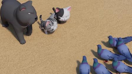 甜甜私房猫:鸽子,你要被小奇抓到哦