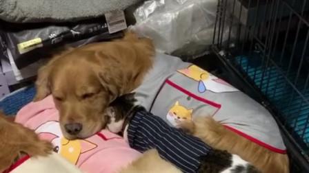 猫狗一家亲,温馨的画面