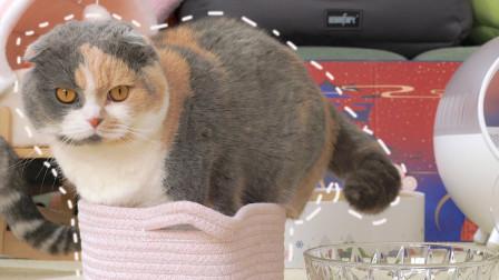 猫到底是不是液体?主人给猫几个超小容器,胖猫把自己塞进去了