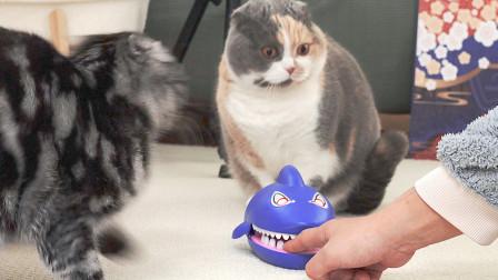 猫咪忠诚度测试!主人假装受伤大声喊救命,一群猫全都吓飞了