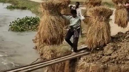 印度人挑稻草,这师傅也是高手,这样的情况下还能如履平地!
