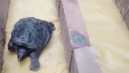 看来乌龟比兔子跑得快,也不是没有原因的,你就不能自己跑吗?