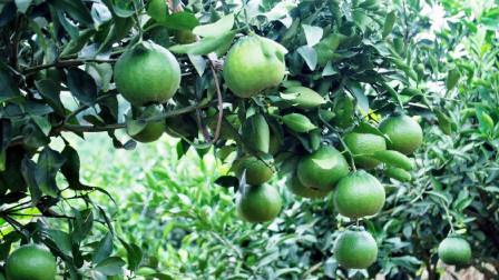 农村发展农产品是突破口,农产品应遵循绿色、健康、可持续发展原则
