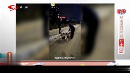 主人醉卧在路边,两只狗狗分工守候在其身边,路人都被感动了