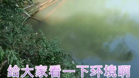 山清水秀的一个钓点 钓鱼视频节目 钓鲫鱼技巧