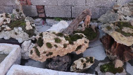 不花一分钱,自己制作精美石头盆景,放在客厅太美了!