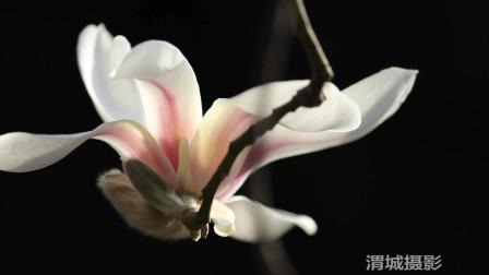 渭城摄协周作品展览
