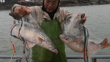 泰叔泰婶分工合作,一网拉起两条五六斤大货,抱起两条鱼高兴坏了