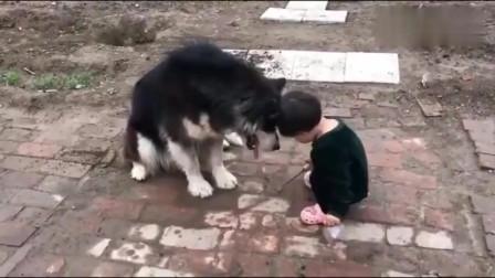 本以为是很温馨的画面,但是狗子一爪子下去就知道是来搞笑的