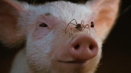 小猪即将被屠宰,蜘蛛朋友在空中写了几个字,结果小猪成了大明星