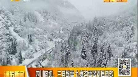 视频|四川阿坝: 三月飘雪 九寨沟雪景别具风韵