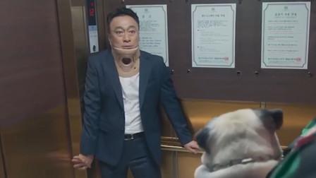 男子车祸出院后,竟能听懂动物说话,但说的内容把他吓坏了!