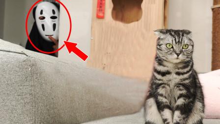 主人cos成无脸男,猫咪回头一看魂儿都吓飞了:大白天的活见鬼!