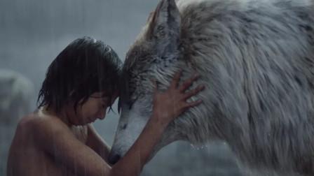 男孩从小被狼王收养,长大后竟1人打败老虎,成为了森林之王!