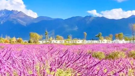 音乐美景,美丽的《香格里拉》,草原上绽放着七彩花