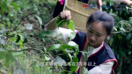 微众银行微业贷 x 吴晓波频道 中小企业生意圈   明星企业家 巅茶