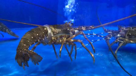 广州的海鲜好贵,龙虾99才一只,太奢侈了我吃不起