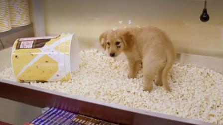 4分钟看《神犬小巴迪》,狗狗冲进电影院,竟开始狂吃爆米花