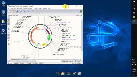 【四方居士】SG#14质粒图谱软件Snapgene菜单里的窗口及帮助介绍