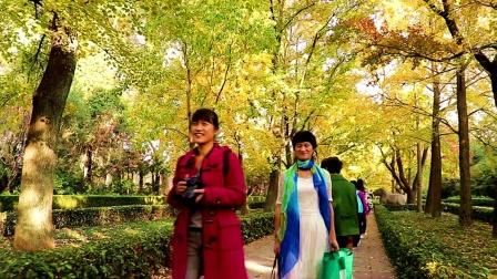 南京明孝陵,石象路,翁仲路秋季美景绝妙,精彩画面欣赏