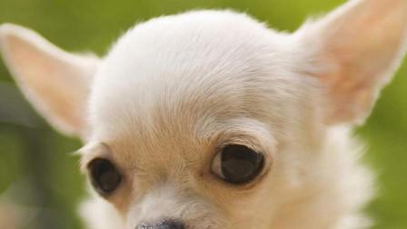 """对主人不够""""忠诚""""的5种狗,一旦惹了它,拿什么好吃的都不管事"""