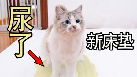 买了新东西千万不要跟猫炫耀!猫嫉妒起来什么都做的出!