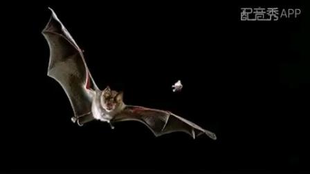 蝙蝠给人类的一封信