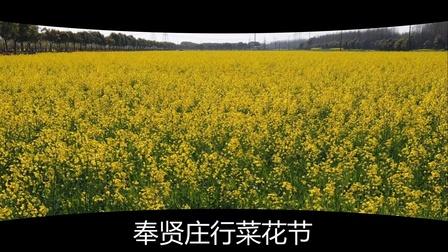 2019 上海奉贤菜花节