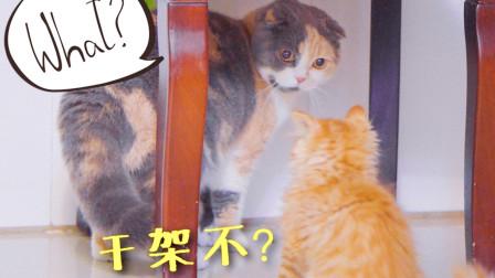 小橘猫手欠又抗揍,被大猫揍了还拼命往上冲,脸皮真厚