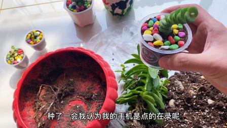 子睿在家花3天时间,把30盆植物重新修剪,可以开花店了