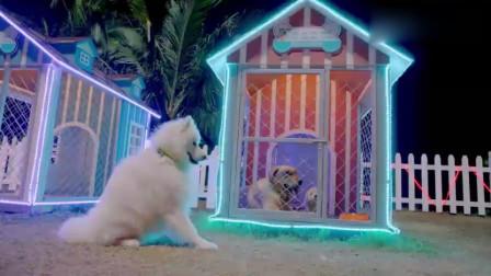 小雪忍不住从笼子里跑出来看小七,宠物之前的爱情!
