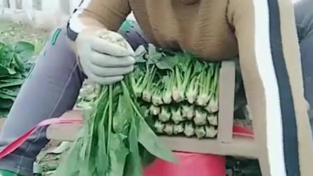 民间牛人创意的捆菠菜神器,只需几个小木板做成,整理出来非常整齐!