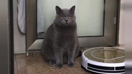 广东小姐姐:我不就是说它胖,它还白眼我,自己都肥成啥样了,没数吗?